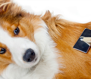 Dog Grooming Epsom Services