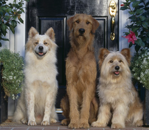 Dog Home Boarding Services